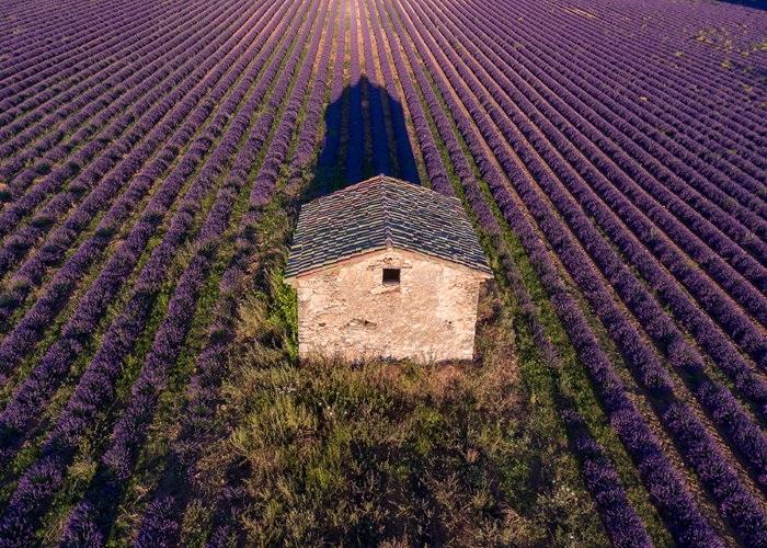 Young-living-Farm-Frankreich